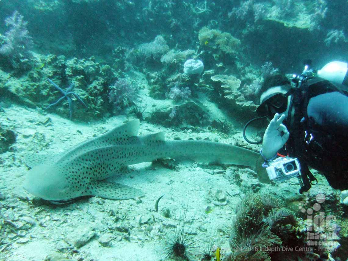 Join us at Indepth for a PADI AWARE Shark Conservation Course on Phuket Thailand