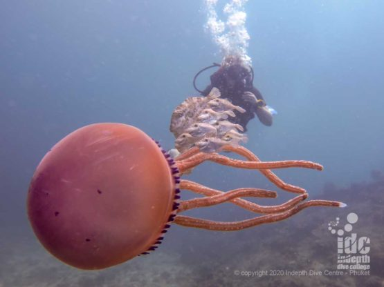 Beautiful and rare jellyfish at Turtle Rock