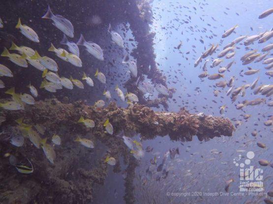 Diving King Cruiser Wreck
