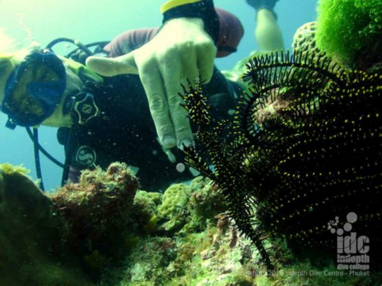 Ko Dok Mai is a great Phuket scuba diving experience