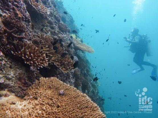 wall diving Phuket at Koh Dok Mai dive site
