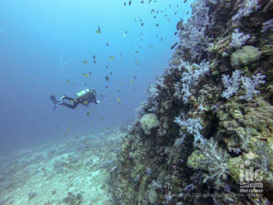 Pristine reef at Koh Haa Neua
