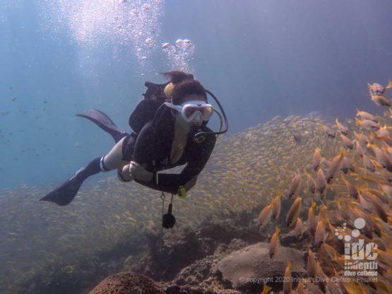 Diving along large school of fish at Koh Haa Neua