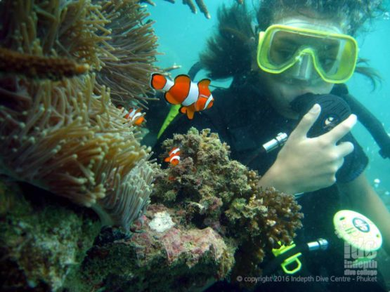 Do you want to try scuba diving with Nemo while on holiday?