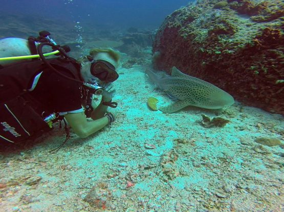 Nothing like diving with Leopard Sharks with Indepth Dive Centre