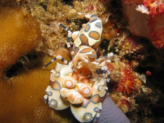 Ko Bida Nok is great for marco photography and harlequin shrimps