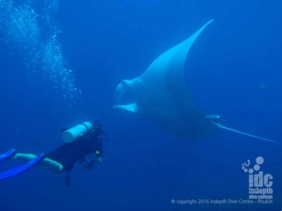Manta Dive at Hin Daeng with Indepth Dive Centre