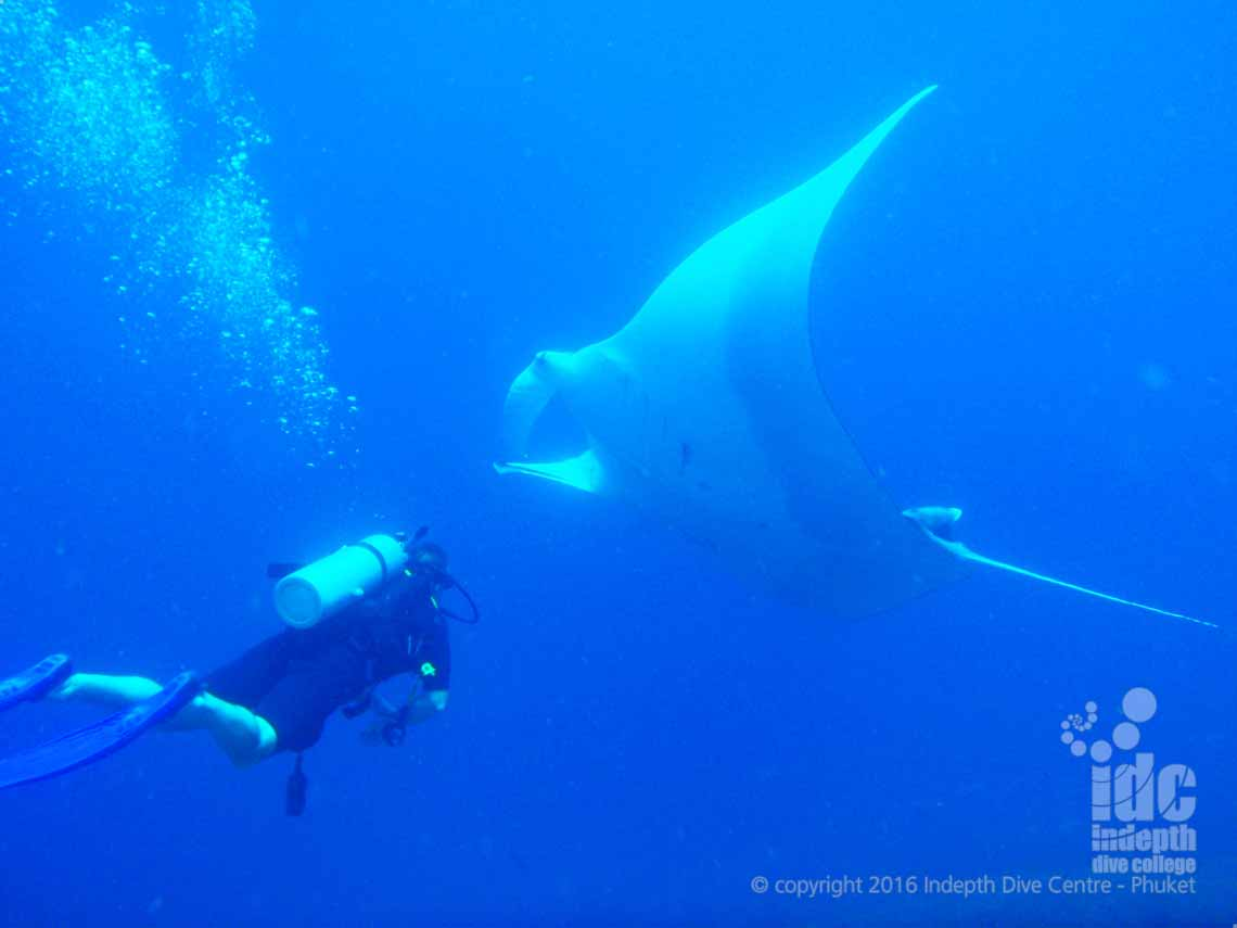 Manta Fly By at North Point Similans with Indepth
