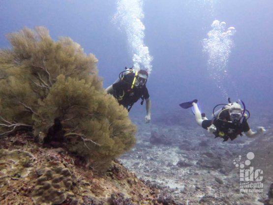 Diving Phuket dive sites Maritas rock