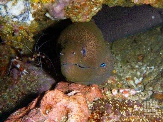 Moray Eel on a Phuket Scuba Liveaboard Trip to Three Islets Burma