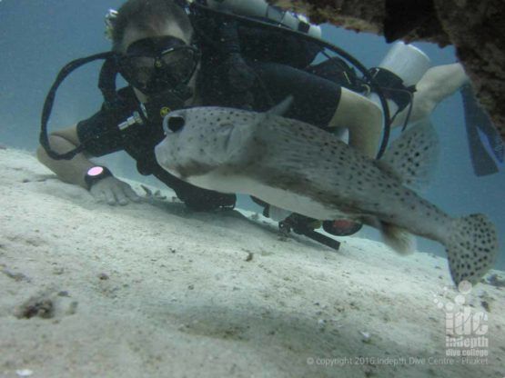 Poseidon Rebreather diver taking his PADI Underwater Naturalist course on Phuket with Indepth