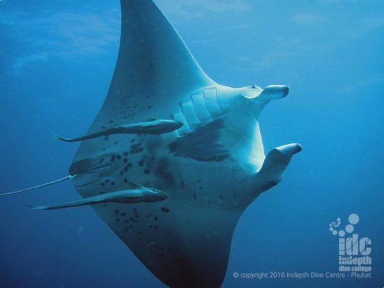 Nothing like a Nitrox Manta dive in the Similan Islands with Indepth