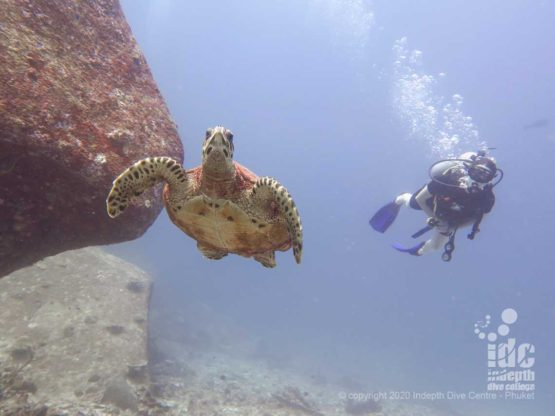 Turtles are a frequent sight when diving North Point Similan Islands