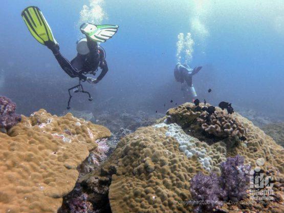 Scuba diving North Twin Pinnacle Myanmar