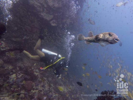 Healthy reef at Twin Cheeks AKA North Twin - Myanmar Diving Liveaboard