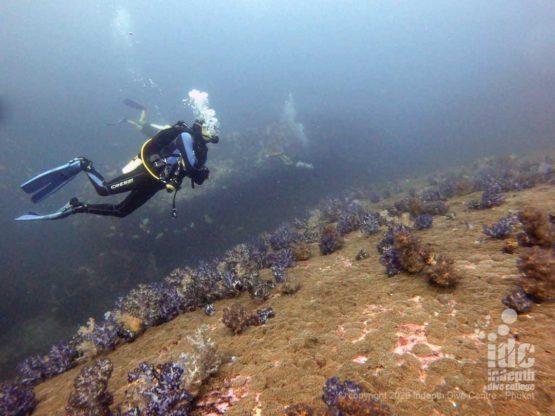 Healthy Reef at North Twin Pinnacle Dive Site Myanmar