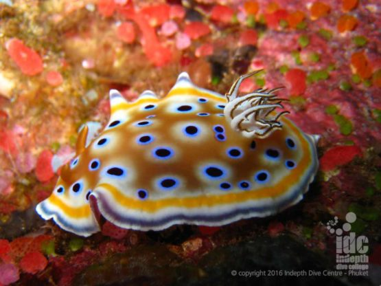 Nudibranch photos are some of our customers greatest Phuket moments