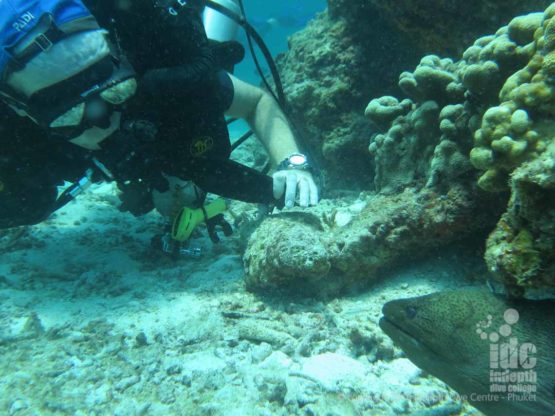 PADI AWARE Shark Conservation student diving on a Rebreather