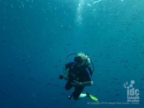 Fish encircling a Phuket scuba diver during a PADI Drift Diver Course
