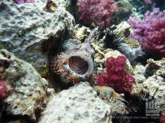 Scorpionfish can make excellent Digital Underwater Photographs