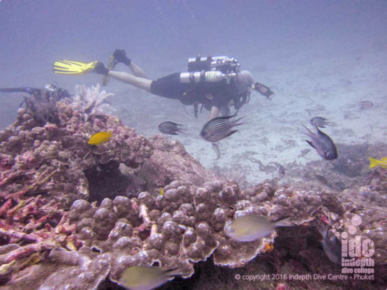 rebreather diving at Similan Beacon Reef