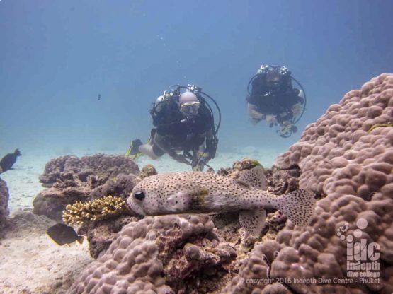Rebreather Diving Similan Islands at Honeymoon Bay Dive Site