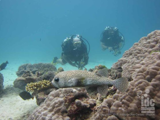 Poseidon Rebrerather Divers at Honeymoon Bay in The Similans