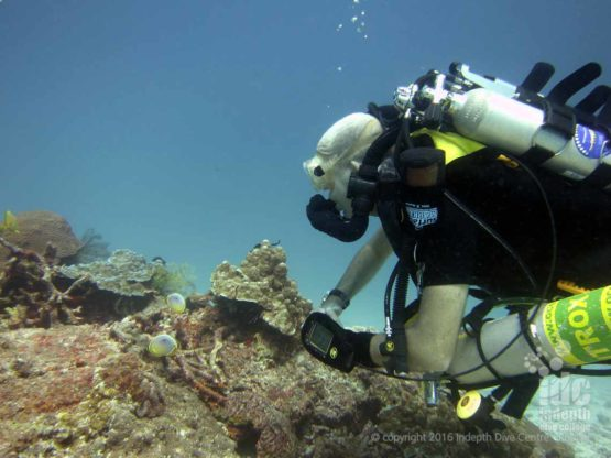 There is nothing like diving on a Poseidon Rebreather at Elephant Head Rock in The Similans