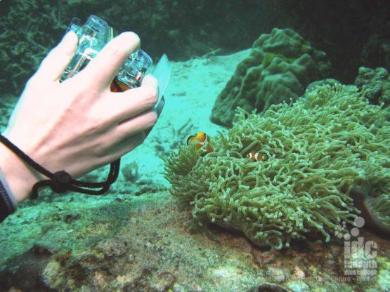 PADI Underwater Photo Course student taking some practice shots of Nemo