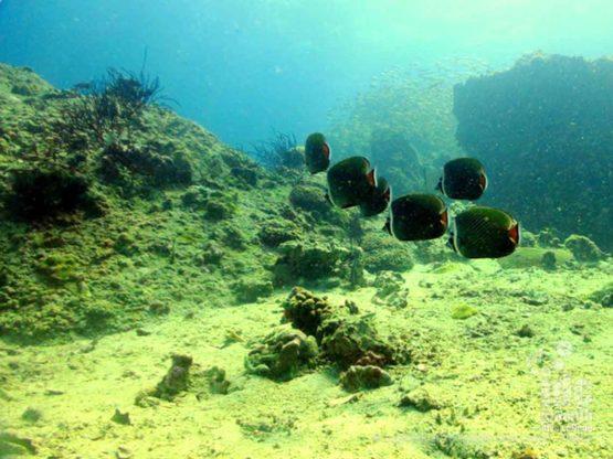 Racha Yai Dive Site Bungalow Bay is a nice relxed dive site