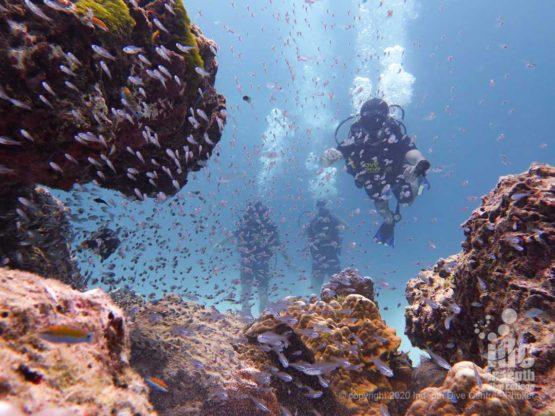 GLassfish Racha Yai Bay 1 Dive Site