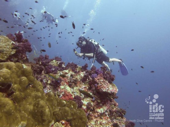 Diving at Richelieu Rock best Thailand dive site is a mesmerizing experience