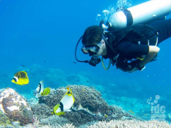 Why not Scuba Dive with some Butter Fly Fish with Indepth Dive Centre Phuket