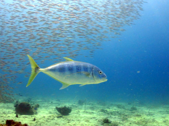 Scuba Diving at Ko Bida Nok with Indepth Dive Centre