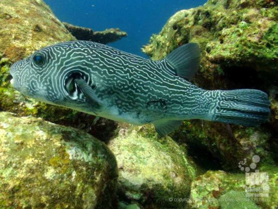 Join Indepth Dive Centre for a Scuba Diving Tour to Bungalow Bay