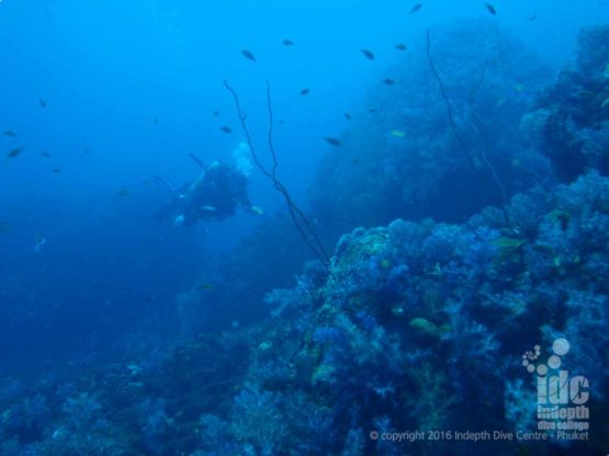 Scuba Diving at North Point in The Similan Islands