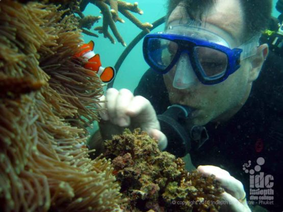 Scuba Diving with Indepth Dive Centre at Racha Yai Bay 3 Phuket