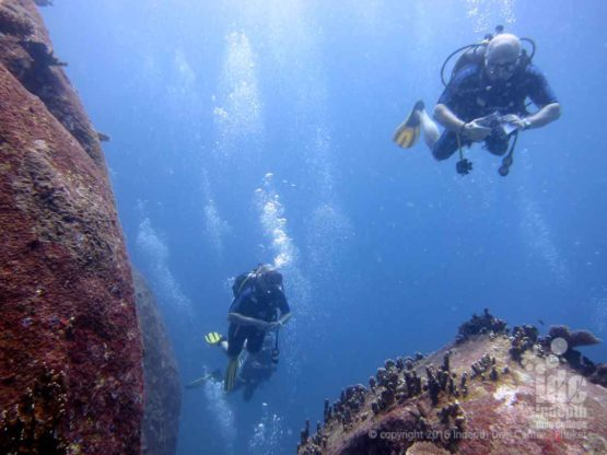 Indepth runs daily Scuba Diving Trips to Koh Dok Mai Phuket Thailand