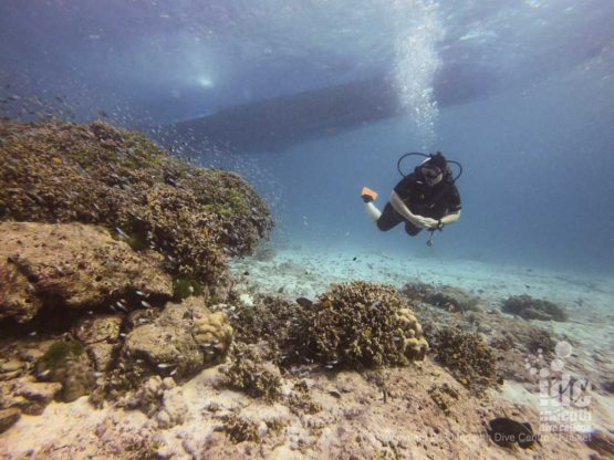 The shallow reef of Honeymoon Bay Dive Site is perfect for check dives at the beginning of a Similan Liveaboard