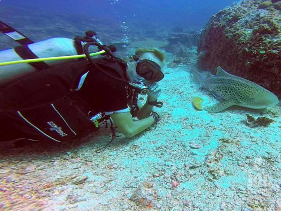AWARE Shark Conservation Course instructor getting nice and close to a Leopard Shark