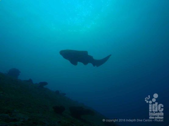 Shark Diving at Turtle Rock in The Similans with Indepth Dive Centre Phuket