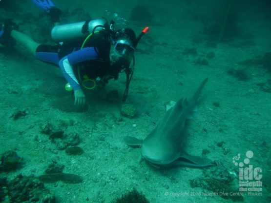 Taew Owen shark diving at Ko Tachai Reef with Indepth Phuket