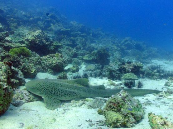Shaek diving at Ko Bida Nok Phi Phi Islands