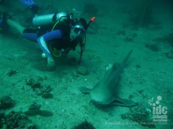 Taew Owen shark diving at Shark Point Phuket Thailand