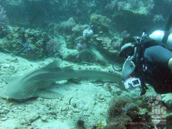 Sharks make excellent underwater photos