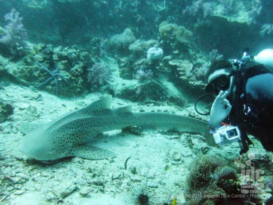 Shark photos are something everyone wants when scuba diving on Phuket