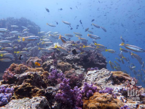 Shark Point's pristine coral reef