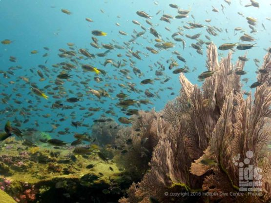 Shark Point has a lot of stunning Sea Fans