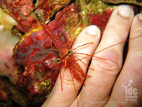 Durban Dancing Shrimp make incredible Marco photos if you are patient enough they will even clean your finger nails