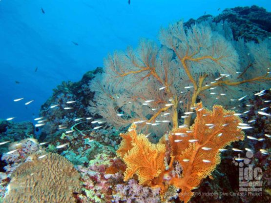 Boulder City in The Similans has stunning Corals and Sea Fans